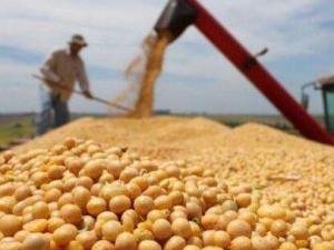 中国拟对美大豆等商品加征25%关税