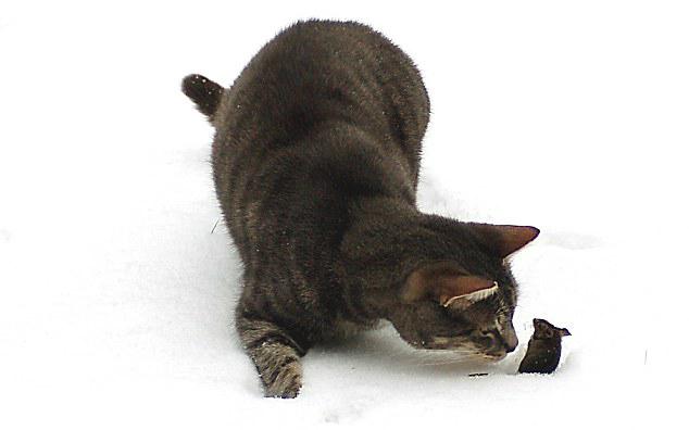 动物鼠雪景图片