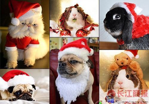 超萌动物们也过圣诞节