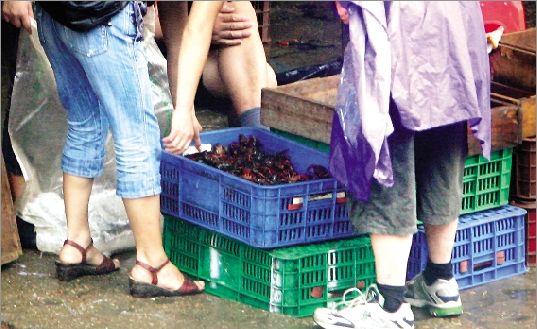 记者近日暗访了华南海鲜市场