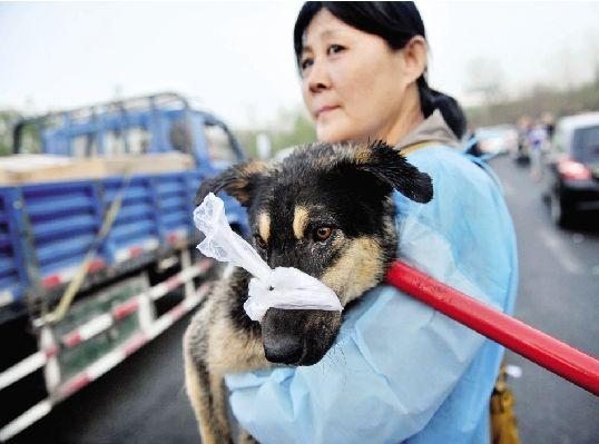 动物保护志愿者高速路拦截运狗车
