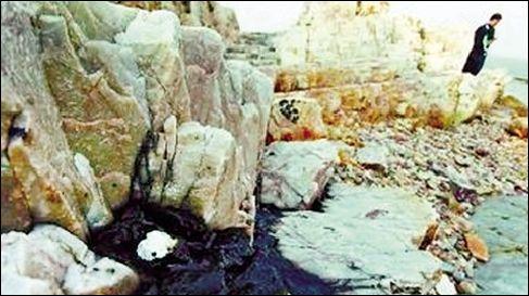 在长岛大钦岛采集的死亡鱼类样品和水样
