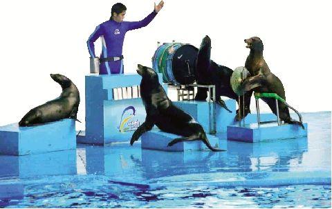 袁阳平 通讯员 易兰静)今日起,华中最大的海洋主题公园——武汉海昌