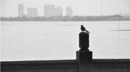 从武汉动物园边的墨水湖望过去