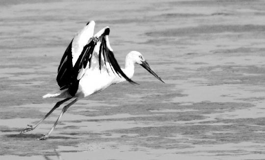 迁徙的鸟 - 文化 - 长江商报官方网站