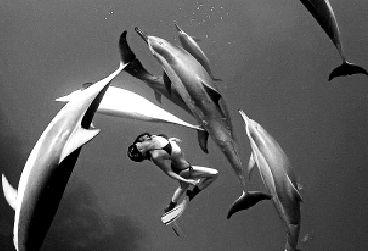 蕾娜与海豚在玩抢树叶游戏.