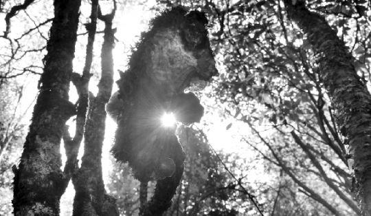 于人,是恐惧是迷失 于动物,那里是天堂 - 石晓轩 - 爱之泉的博客