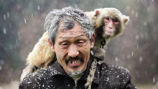猴子为什么跟人�y.b9`�_他们都当猴子是自己的亲人