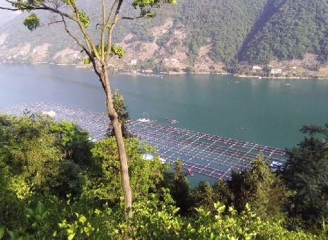 湖北千岛湖鲟龙科技有限公司(鲟龙科技子公司)养殖的鲟鱼总量为1071.